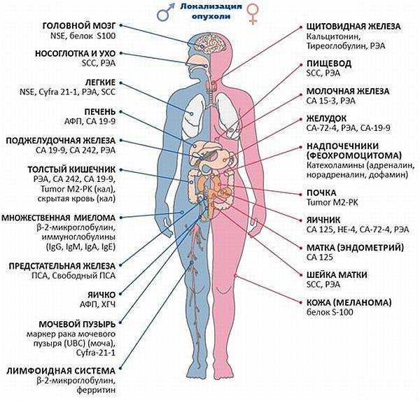 анализ на паразиты в организме человека