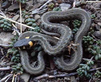 Змея укусила человека