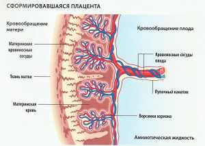 Степень зрелости плаценты 1 2