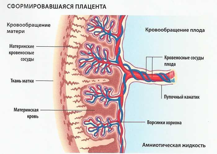 2 степень зрелости плаценты на 32 неделе беременности