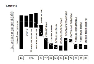 Давление человека. Норма по возрасту, весу, пульс таблица у взрослых мужчин, женщин, детей. Как повысить, понизить давление в домашних условиях
