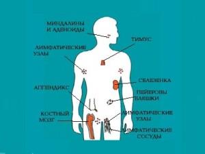 Уровень лимфоцитов в крови