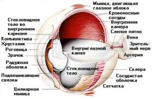 Ухудшение зрения: причины падения зрения у детей, резкое снижение зрения у взрослых, лечение, Азбука здоровья