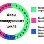 как рассчитать овуляцию
