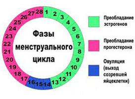 Тесты функциональной диагностики для определения овуляции картинка
