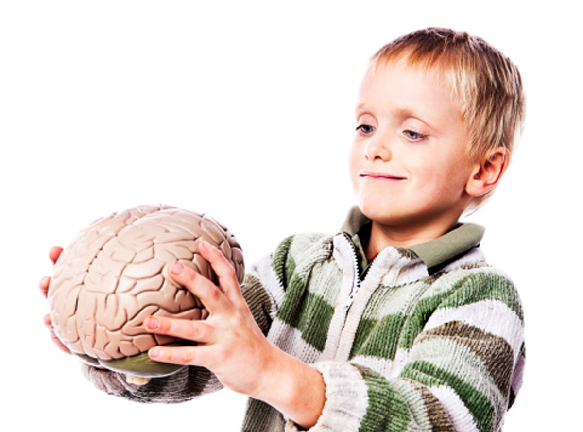 brain development in young children Brain development also does not occur in a  although young children have some ability to improve their executive functioning skills based on  more apa websites.
