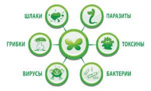 9 мошеннических способов очистки организма, Азбука здоровья