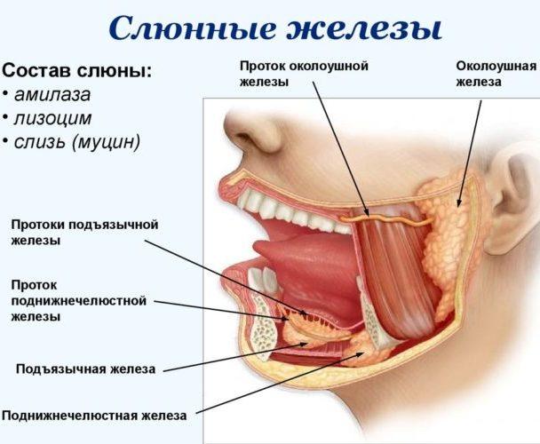 слюнных желез воспаление фото