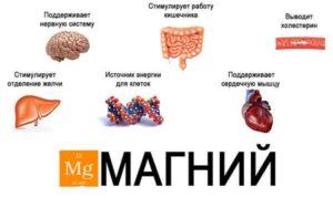 Магний и его функции в организме