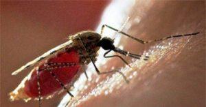 комары переносят вич